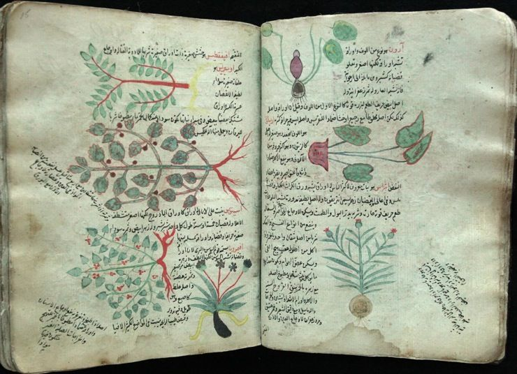 The Digital Library Of The Princeton University Library Includes This Arabic Botanical Manuscript From The 15th Century That Is From Islamica Dibujos Botanica