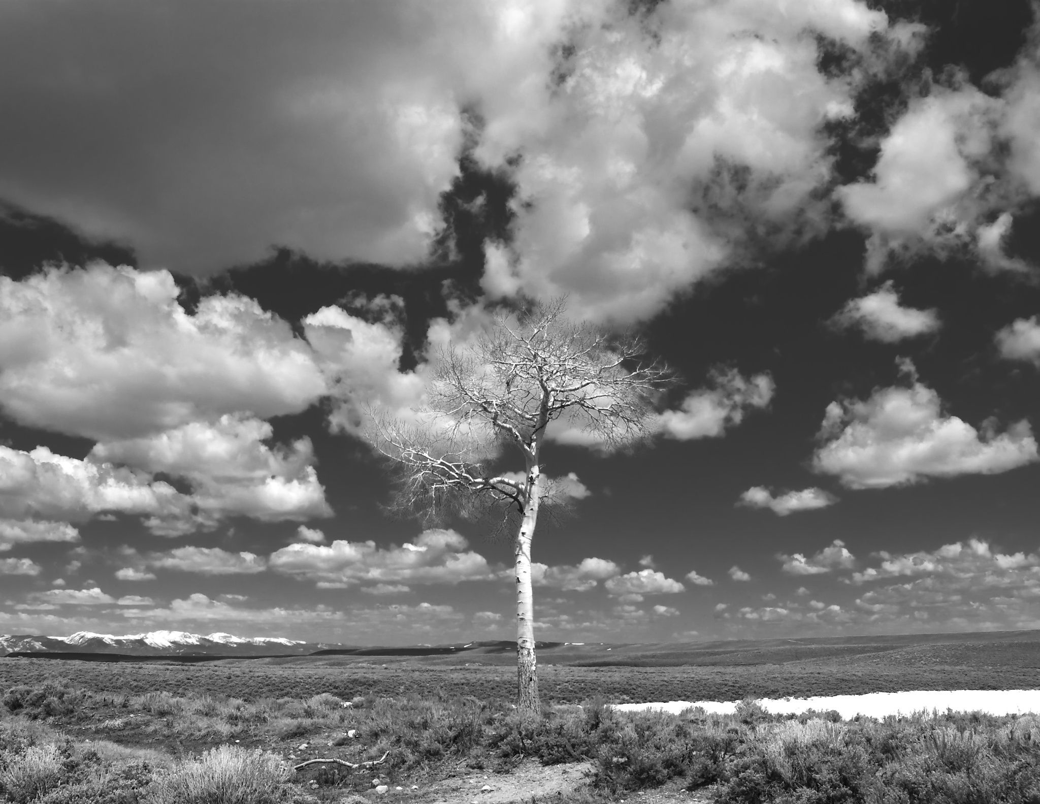 Lonley Tree by Gerry Morrell on 500px