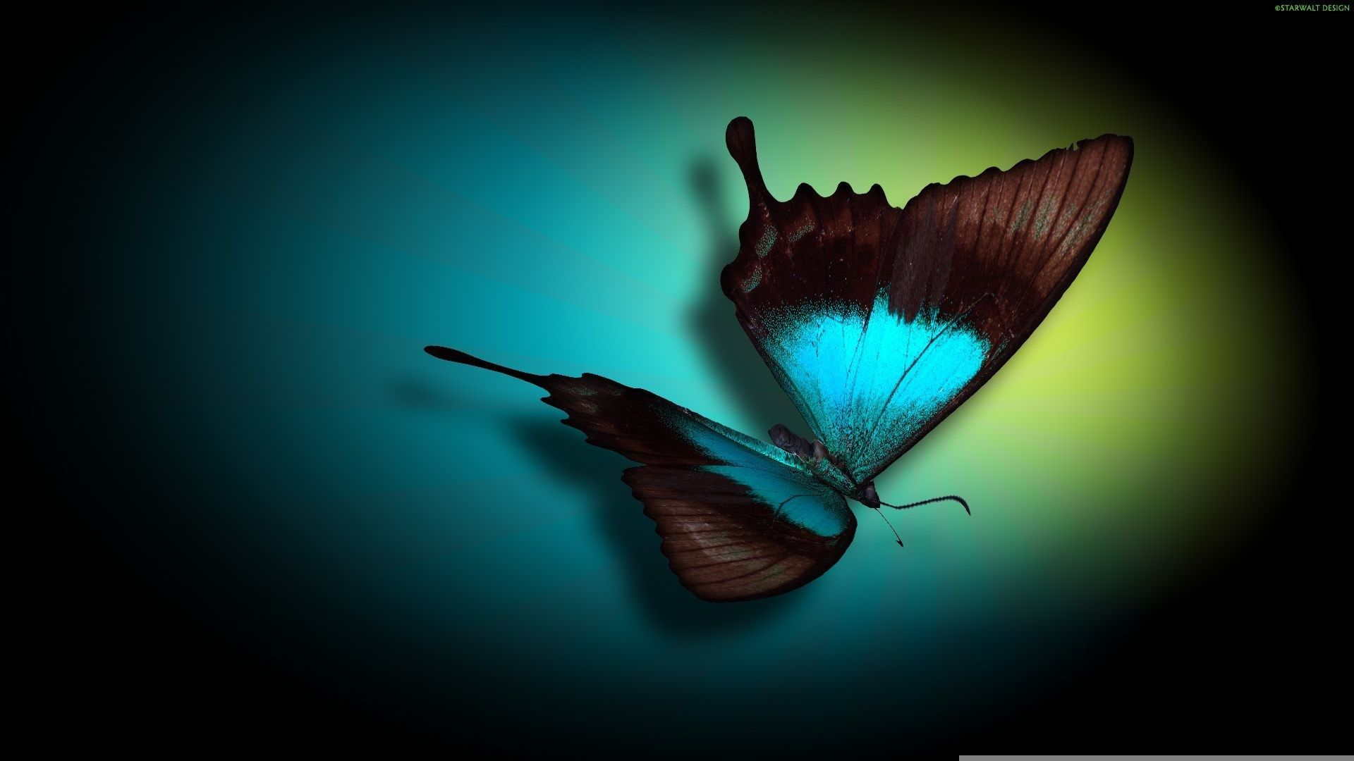 1920x1080 Morpho Butterfly Hd Wallpaper Free Download For Desktop Butterfly Wallpaper Computer Wallpaper Cool Backgrounds