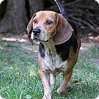 Adopt A Pet Lucky Greensboro Nc Kitten Adoption Dog Adoption Puppies