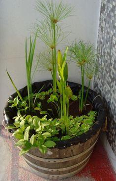 Mini bassin dans demi-tonneau Plus | jardin | Pinterest