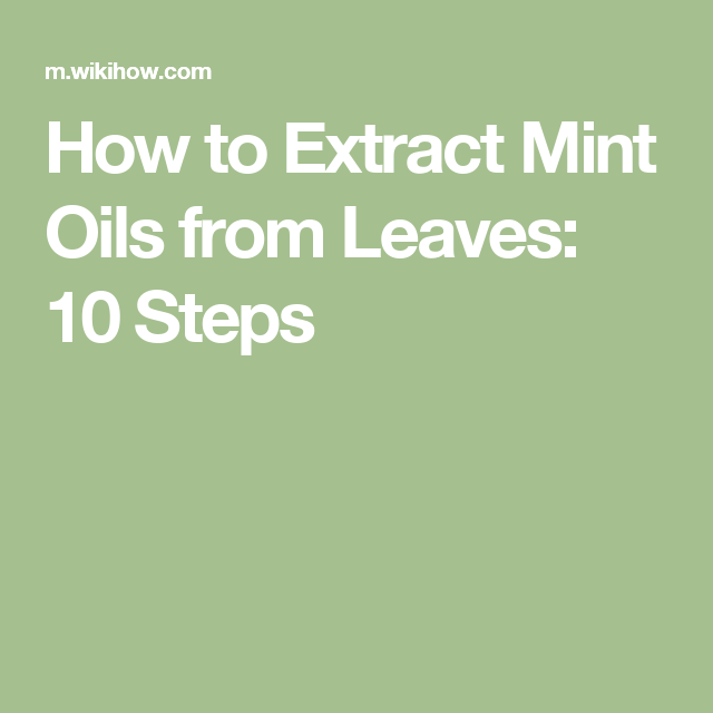 How to Extract Mint Oils from Leaves: 10 Steps