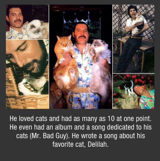 A Few Facts About Freddie Mercury I Even Like Cats More