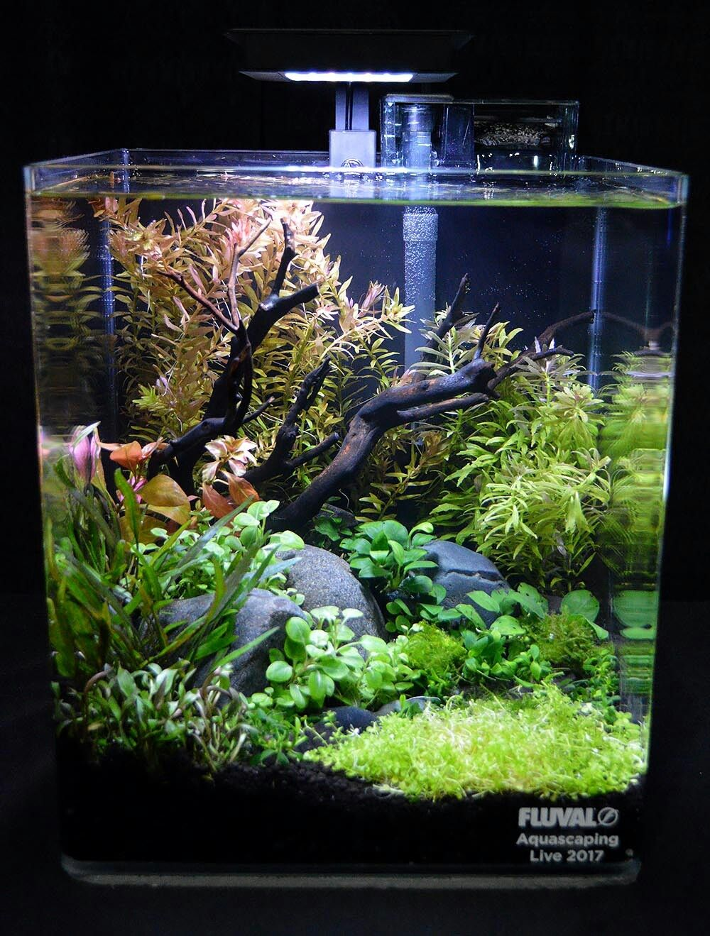 Lovely Aquascaping In This Small Fish Tank Fresh Water Fish Tank Small Fish Tanks Betta Aquarium