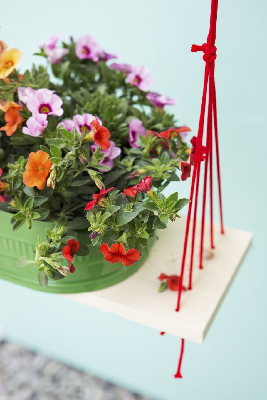 April 2016: Zauberglöckchen Gartenpflanze des Monats #röttger Fotos Blumenbuero.de