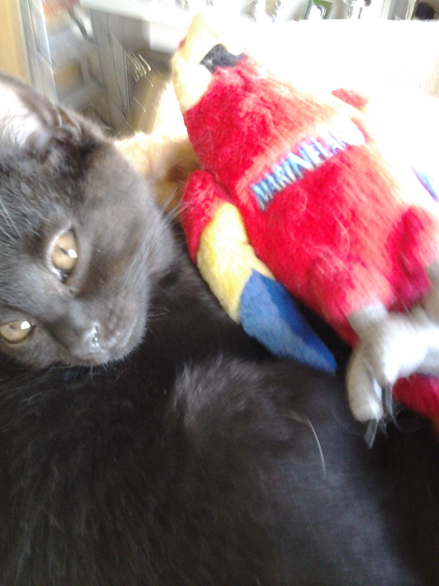 Onze lieve 2de kat
