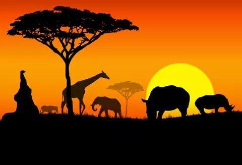 Atardecer Africa Paisajes De Africa Arte De Jirafas Paisaje Para Pintar
