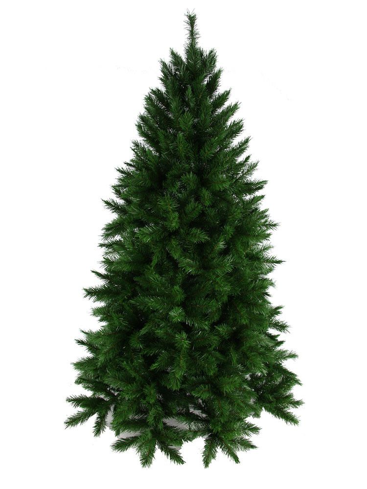 One of our most popular trees- the Vienna Spruce.