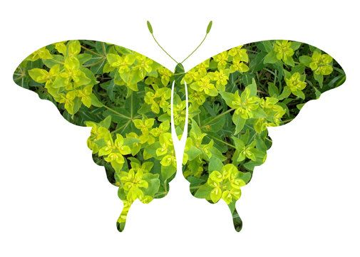 Emerald Green Butterfly photo print #lifeinstyle #greenwithenvy