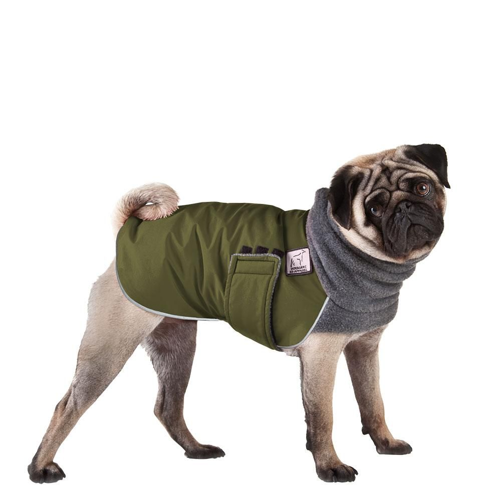 Pug Winter Coat Pugs Dog Training Near Me Pug Puppies