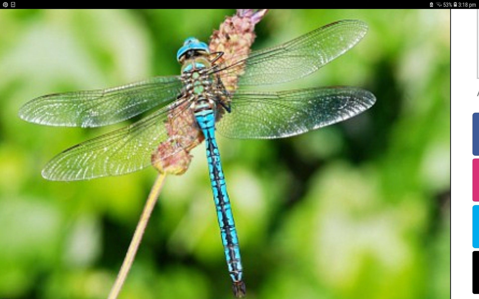Pin By Amanda Hackett On Watercolour Animals Dragonflies Insecticide Insects Animal Behavior