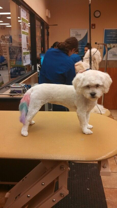 Pet Expressions Petsmart Pets Creative Grooming Animals