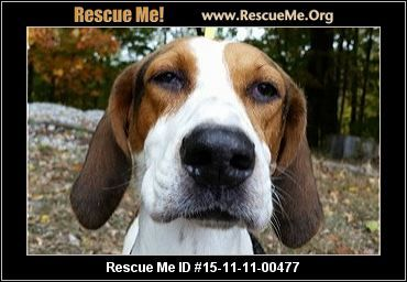 ― Indiana Dog Rescue ― ADOPTIONS ― RescueMe.Org