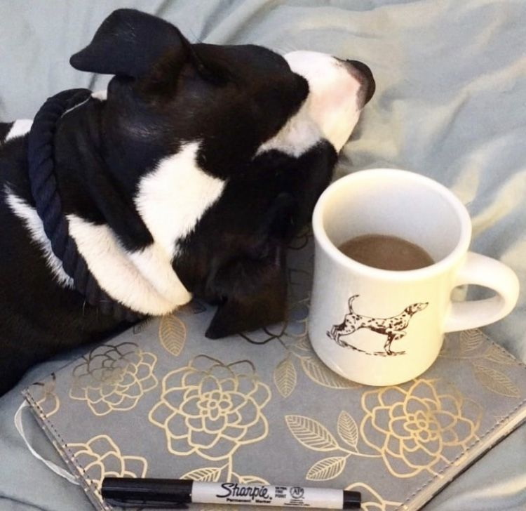 Rescue Brew Diner Mug Coffee hound, Mugs, Wholesale coffee