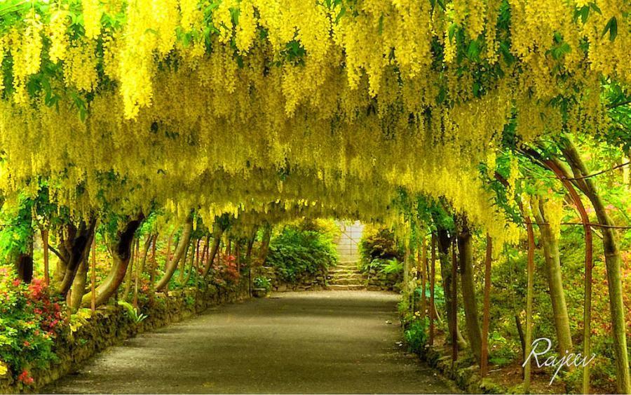 39987ad1ff0fedb678780f9daa21d0b4 - Places To Stay Near Bodnant Gardens