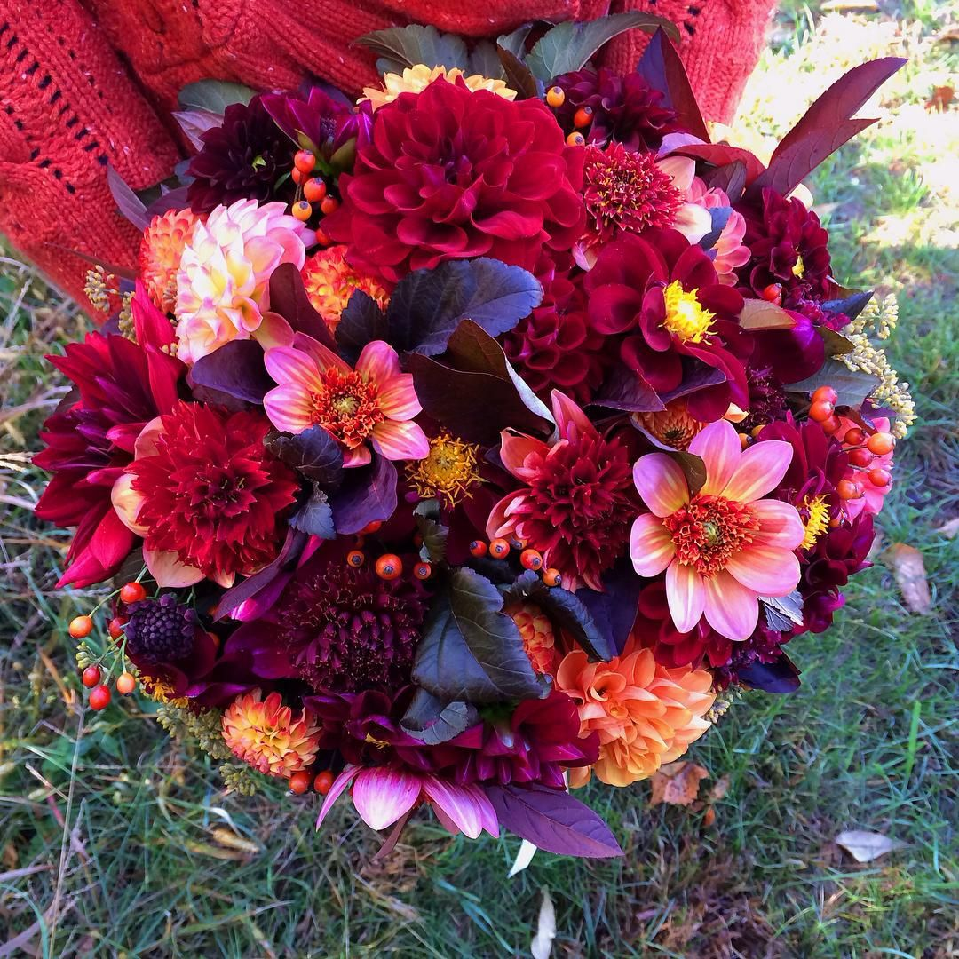 A quick snapshot of Kate's bridal bouquet yesterday.  City hall weddings on a Thursday make me happy! So do boatloads of dahlias.   #farmerflorist #dahlias #bridalbouquet