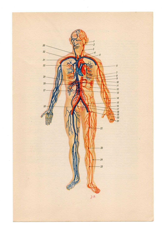 2 Vintage Anatomical Prints eye bones skull Medical Diagrams ...