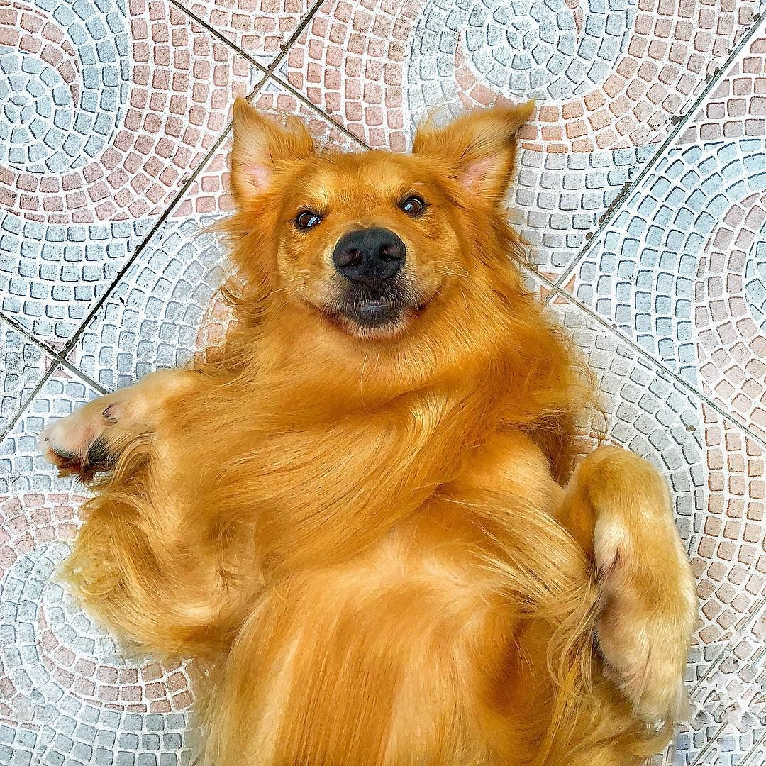 Happy Easter guys | Feliz Páscoa galera!!! . . . . . . #easter #pascoa2019 #goldenretriever #dog  Happy Easter guys | Feliz Páscoa galera!!! . . . . . . #easter #pascoa2019 #goldenretriever #dog #goldenlove #goldens #doglover #instadog #dogsofinstagram #instapet #petsofinstagram #love #bunny #santoscity #013 #summervibes #chill #peace #amor #cachorro #buddy