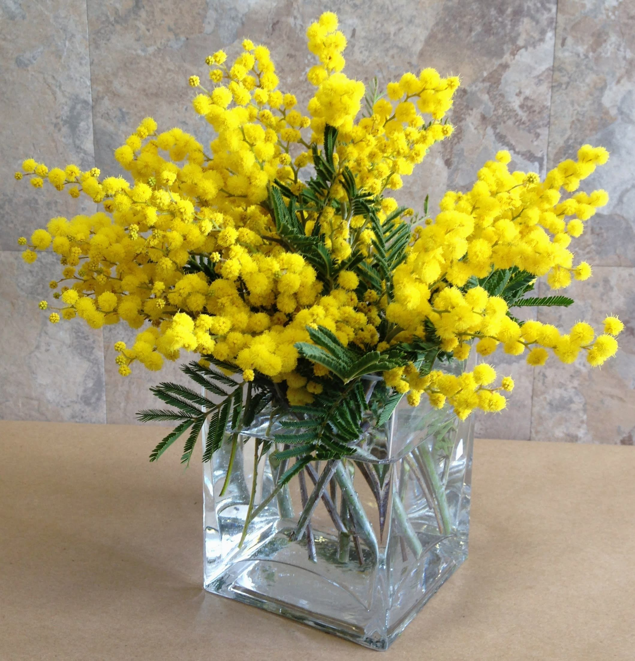Celebrate Womens Day March 8 With Mimosa In Brooklyn Ny Flowers By Emil In 2020 Flower Vases Mimosa Flower Flowers