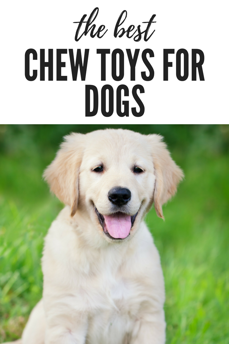 Is Your Dog Always Chewing Up His New Toy Minutes After You Give It To Him Click Here To Check Out Our Soft Golden Retriever Names Dog Names Golden Retriever