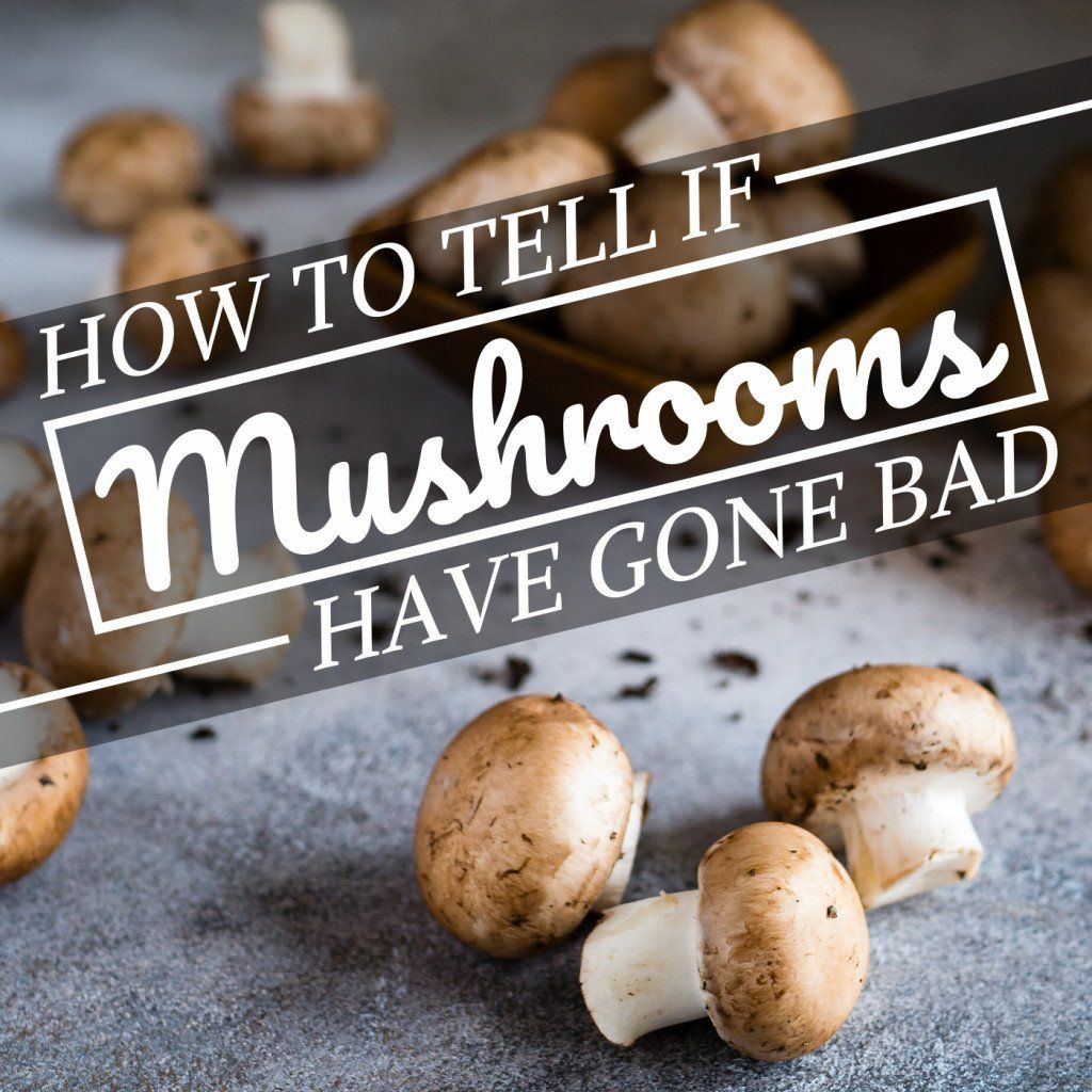 How Can You Tell If Your Mushrooms Have Gone Bad Since They Re Not Fruits Or Stuffed Mushrooms Easy Falafel Recipe Using Canned Chickpeas Falafel Recipe Easy