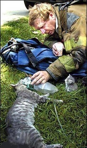 Firefighter with a respirator resuscitating a mama cat while her kitten looks on... Mama cat survived. Thank you to the caring firefighter! ♥