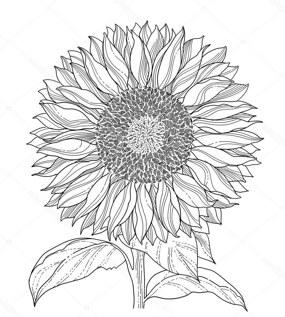Best Sunflower Drawings Images in 2020 Sunflower drawing