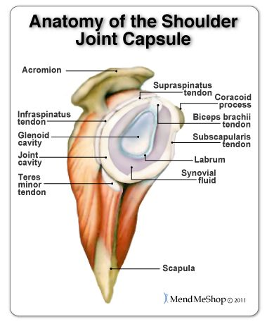 Shoulder Joint Anantomy. Inside the shoulder there are three joints ...
