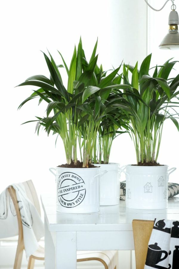 Welche Zimmerpflanzen Brauchen Wenig Licht Haus Einrichtung