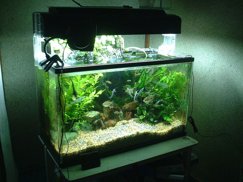 Freshwater aquarium fish maintenance - A Practical Guide To Setting Up A Low Maintenance And Natural Freshwater Aquarium