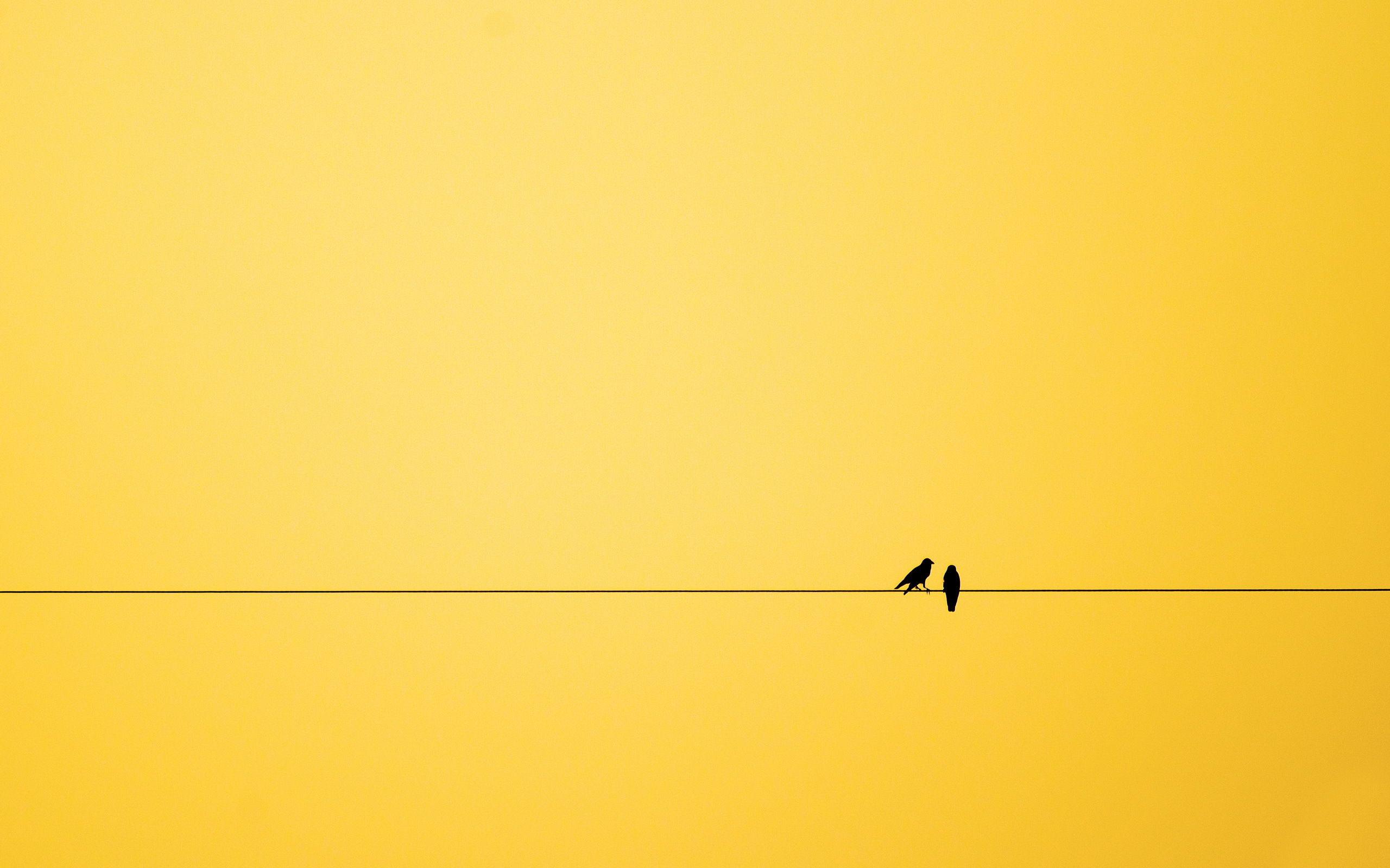 Minimalistic on a wire: monday 6 february (365.360° day 216) | minimalism
