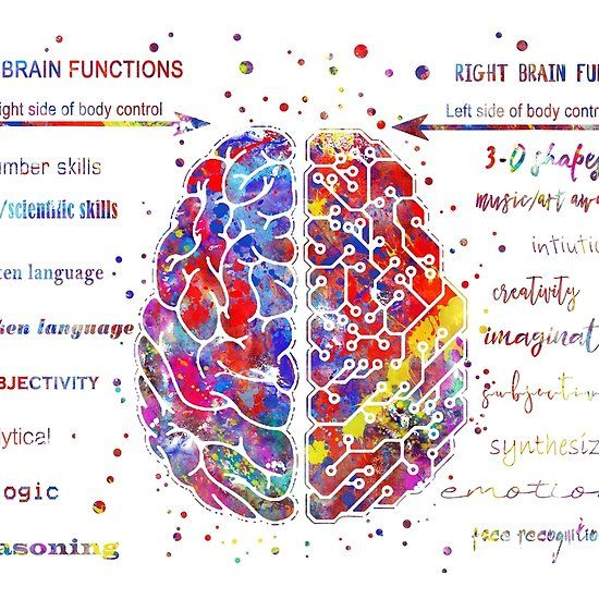 Left and right brain function   Right brain, Brain ...