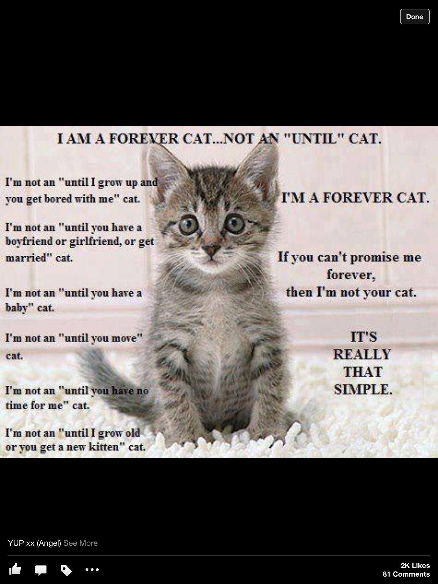 It Is That Simple Super Cute Kittens Cats Kittens Cutest