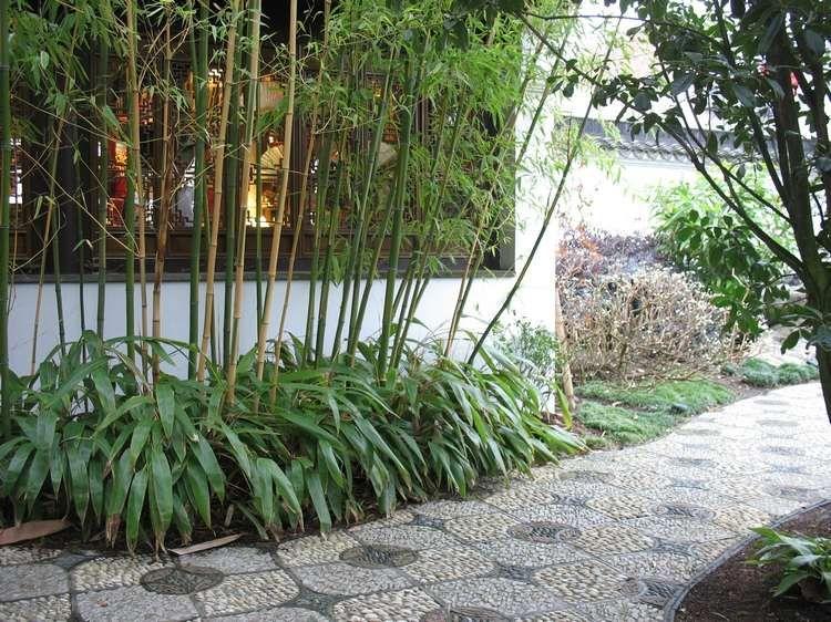 Aménagement jardin avec une touche d\'exotisme- 50 photos ...