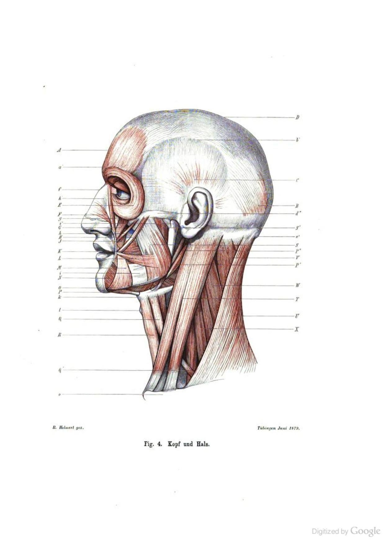 Wunderbar Anatomie Referenz Für Künstler Galerie - Anatomie Ideen ...