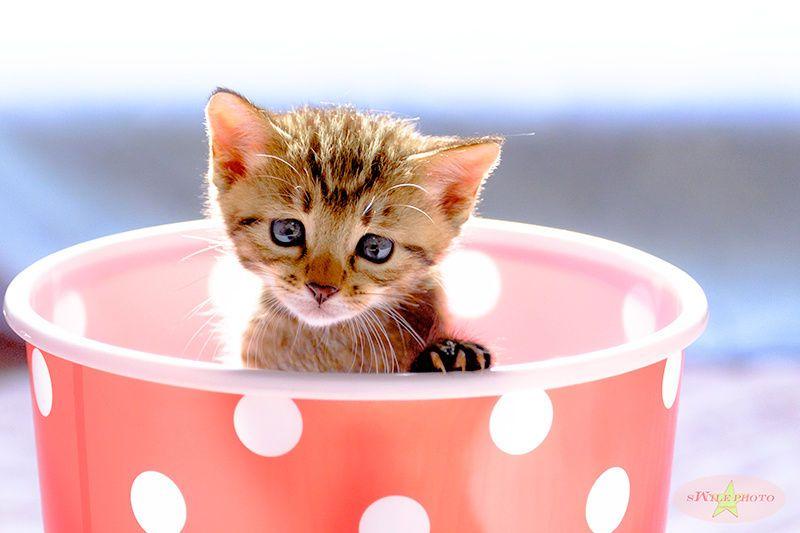 Kitten by Masakazu Inatomi on 500px