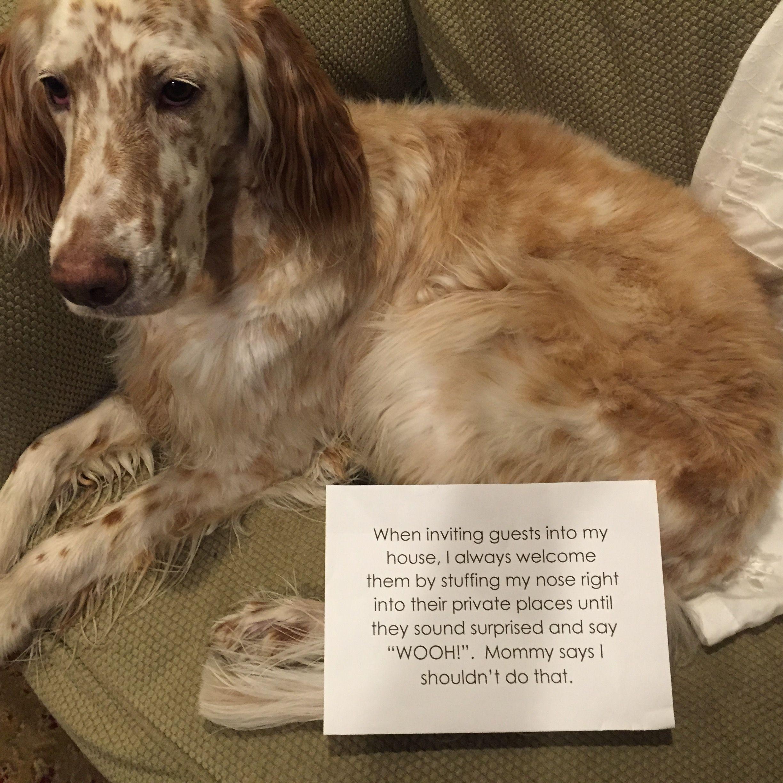 dog shaming 101