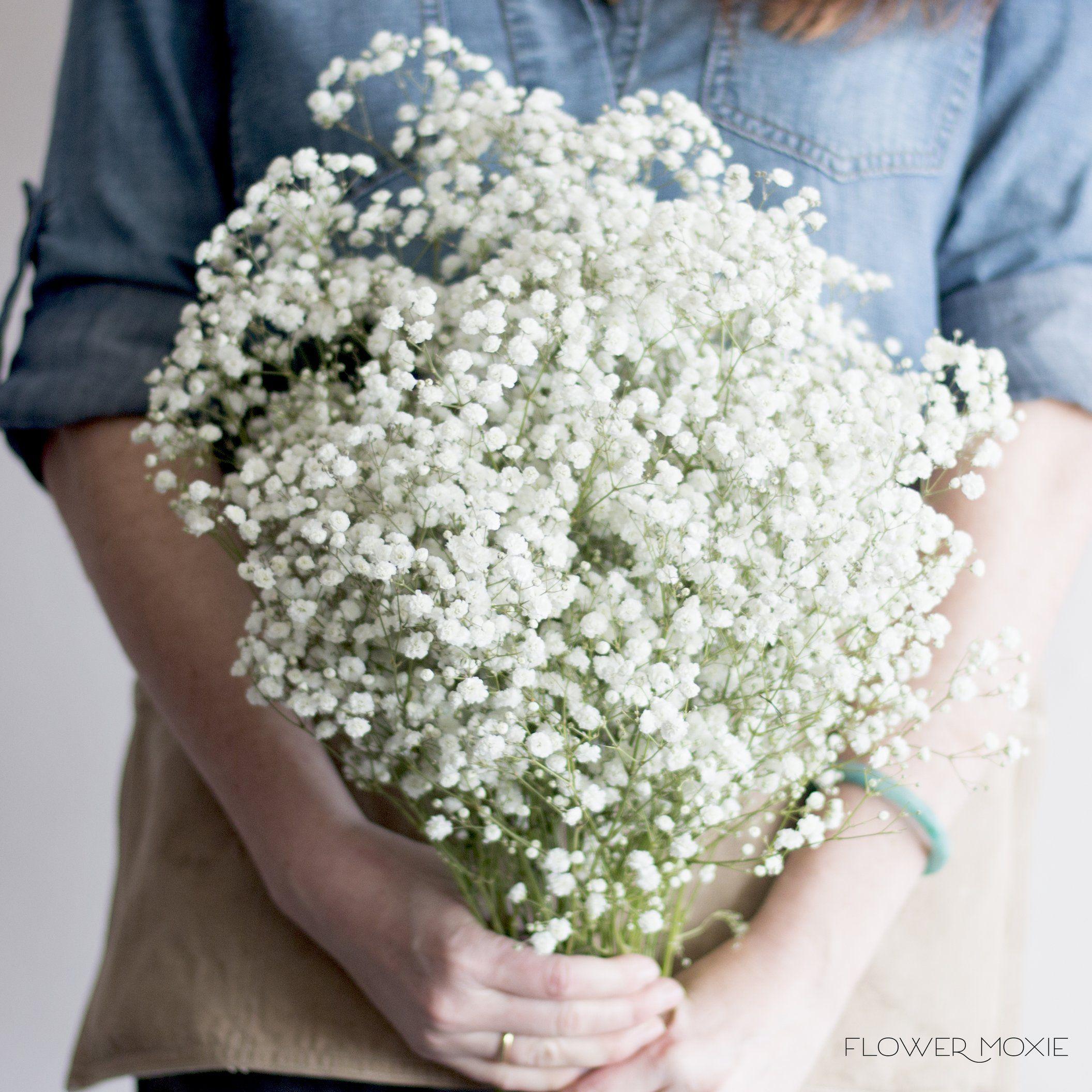 Baby S Breath Flowerdefault Title Babys Breath Flowers Fresh Wedding Flowers Wedding Flower Guide