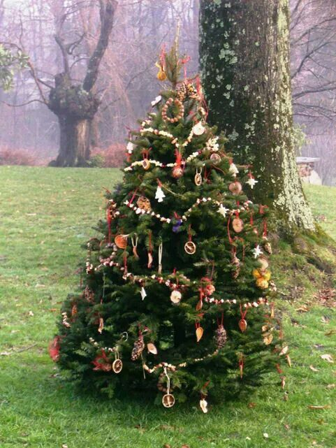 Pin by Cassie Bobo on christmas   Outdoor christmas tree ...