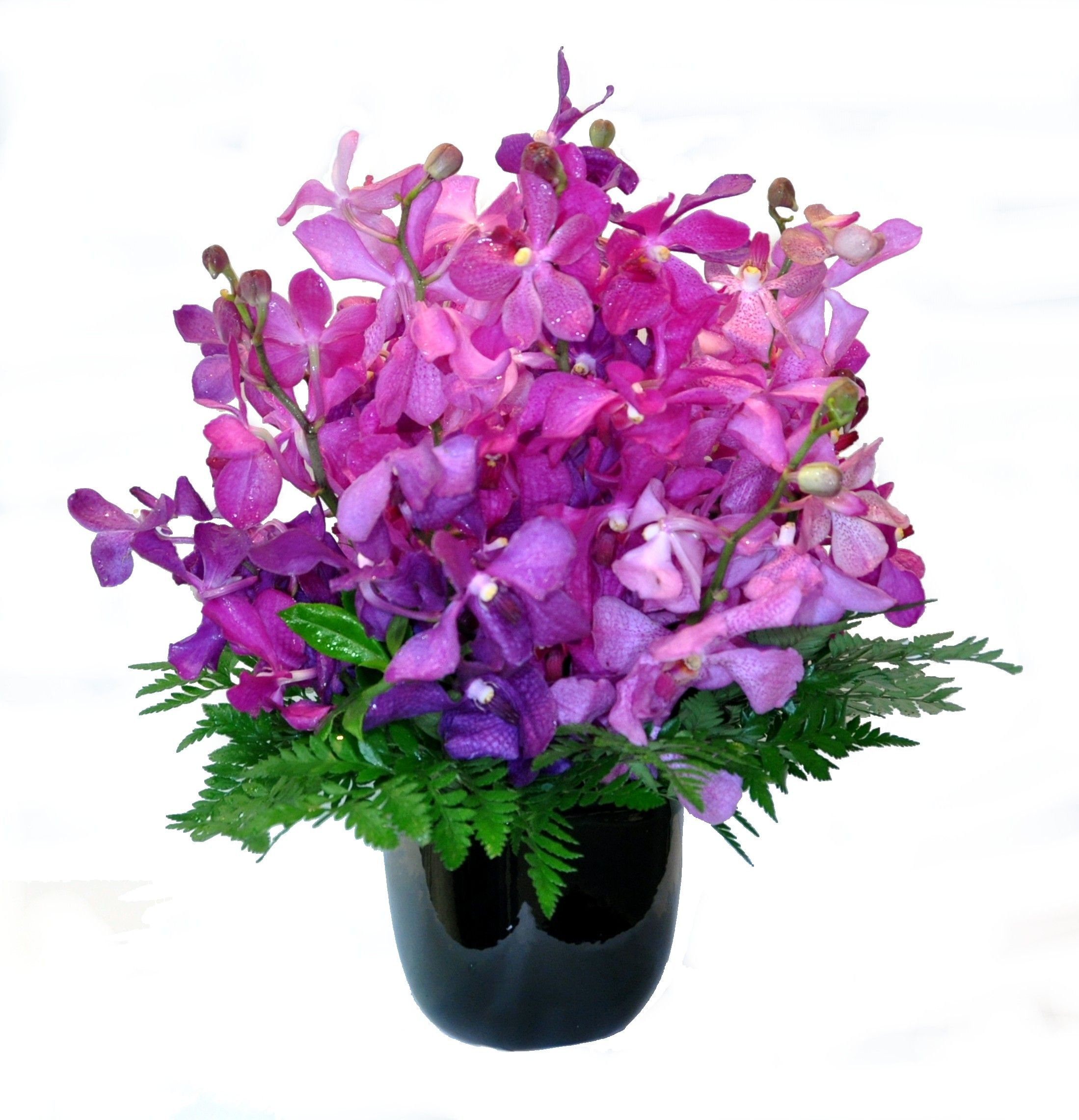 Orchid Arrangement Donvale Flower Gallery Orchid Arrangements Flower Arrangements Flowers