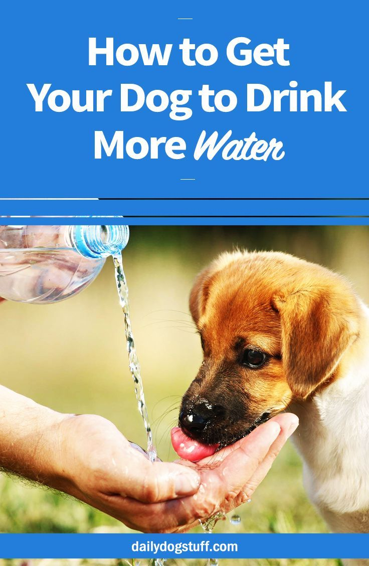 How to get your dog to drink more water dog