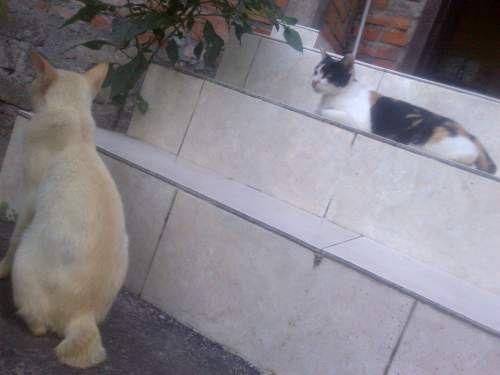 Nama Nama Kucing Jantan Betina Lucu Dan Unik Kucing Kucing Lucu Lucu