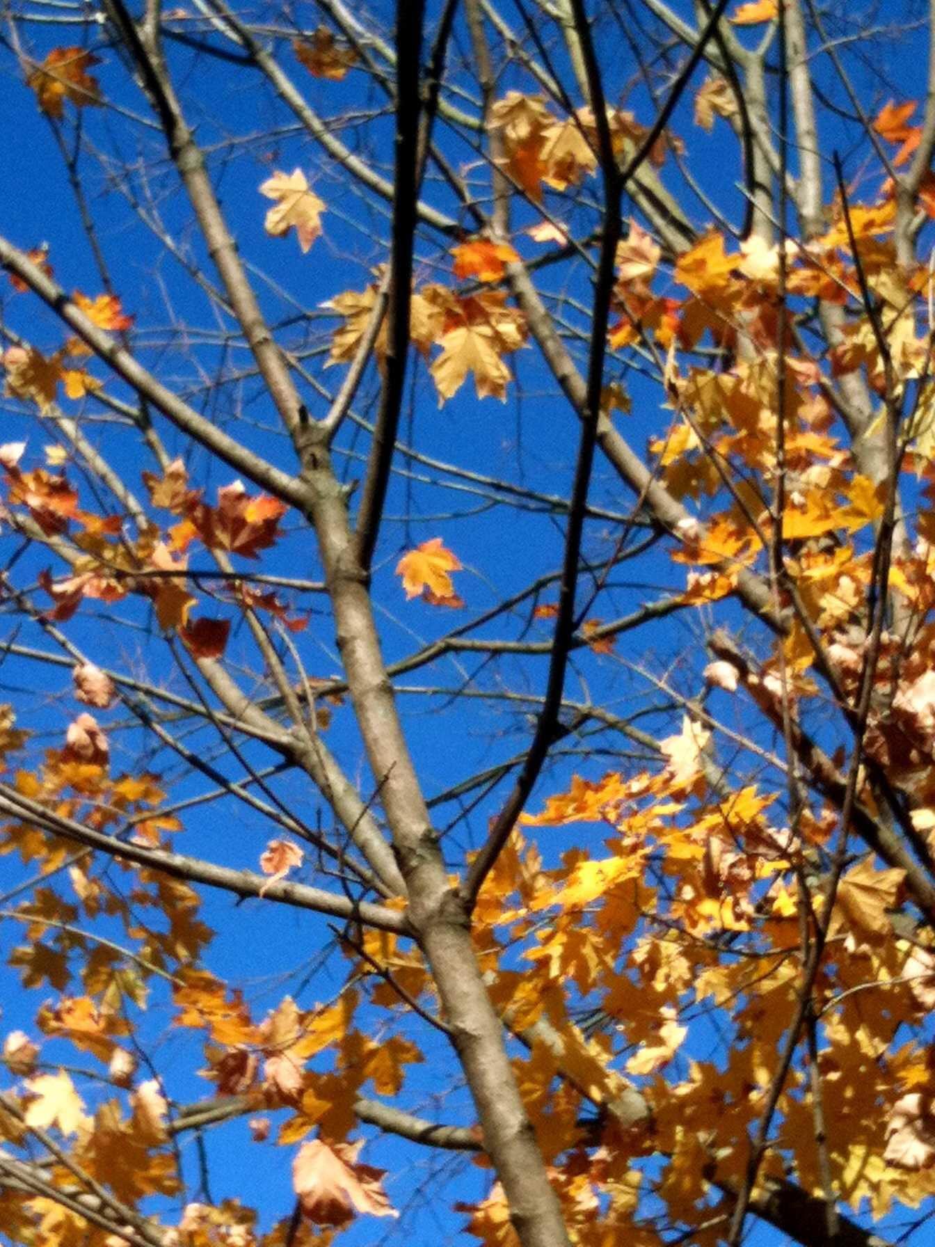 Color me autumn uniquely ella pinterest autumn
