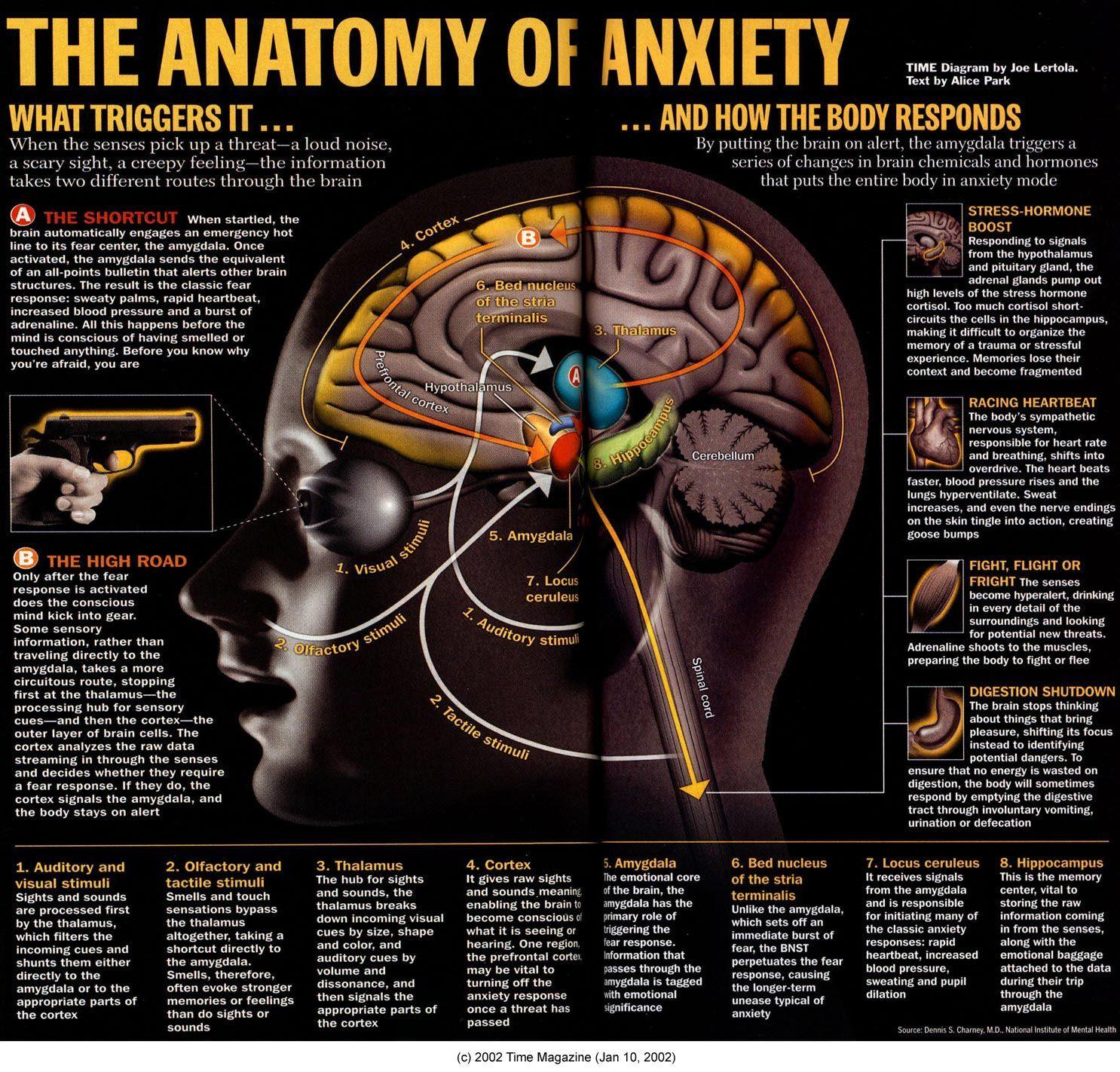 Anatomy of Anxiety #AnxietySymptomsinYourBody | Zdravie | Pinterest ...