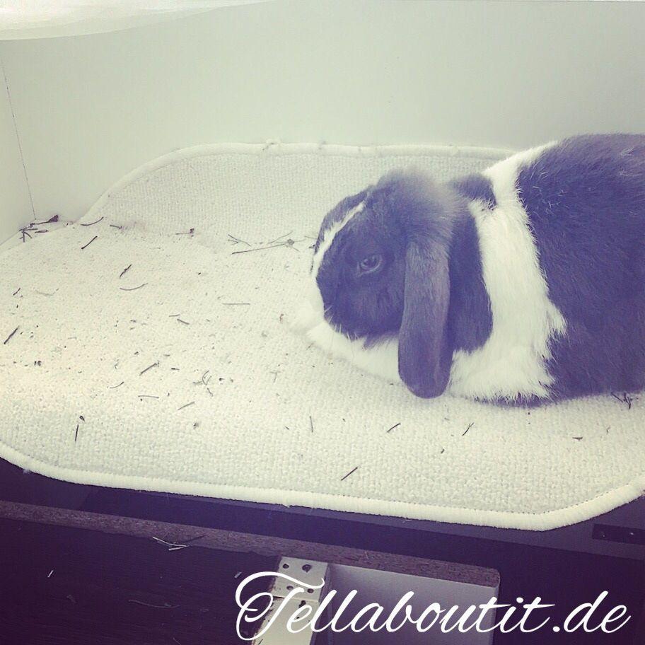 selbstgebauter kaninchenauslauf f r die wohnung zuk nftige projekte pinterest. Black Bedroom Furniture Sets. Home Design Ideas