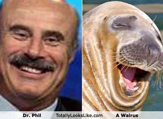 Animals That Look Like Celebrities Dr Phil Funny Like Animals Animals Cute Animal Memes