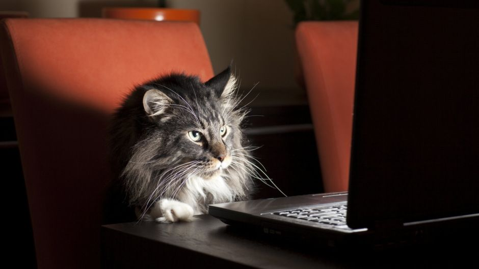cat at work