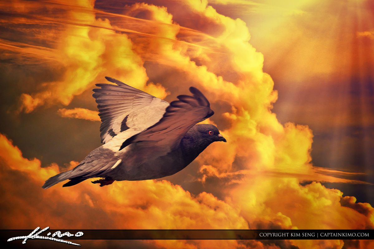 http://captainkimo.com/pigeon-columbidae-bird-flying-in-cloud-sky/