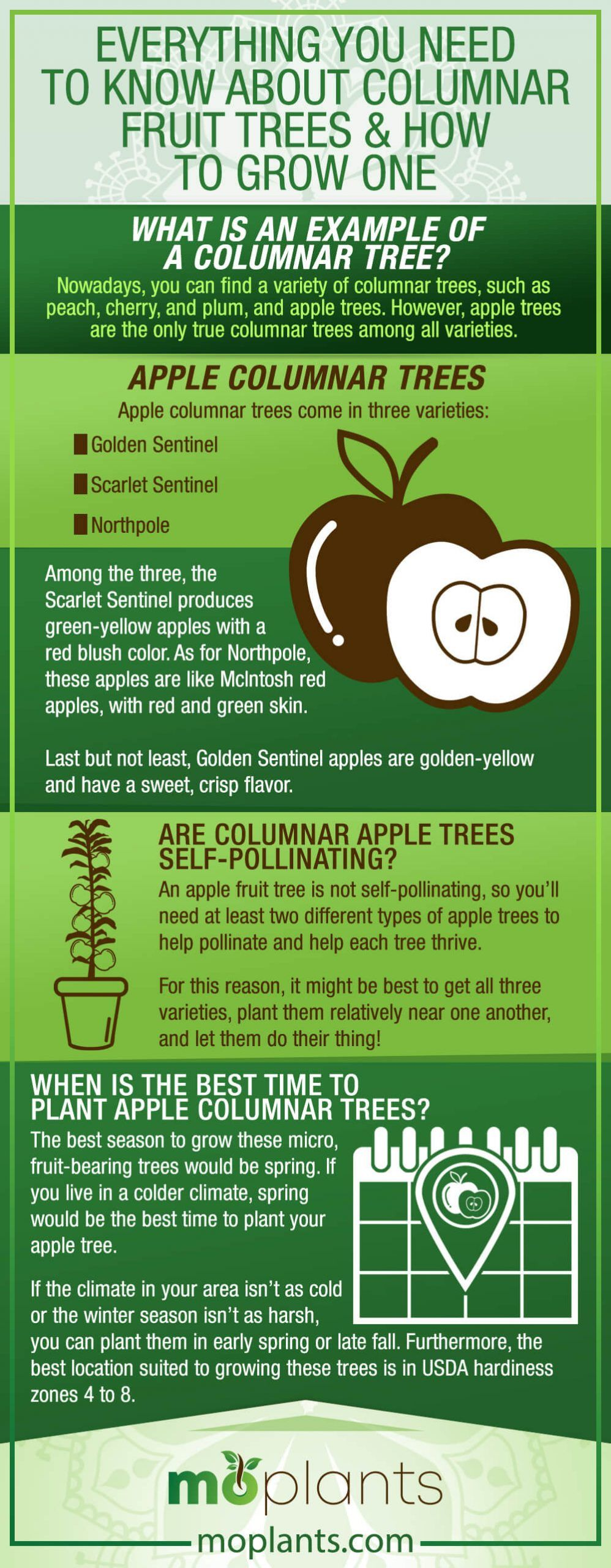 Everything You Need To Know About Columnar Fruit Trees How To Grow One Mo Plants In 2021 Fruit Trees Fruit Bearing Trees Fruit