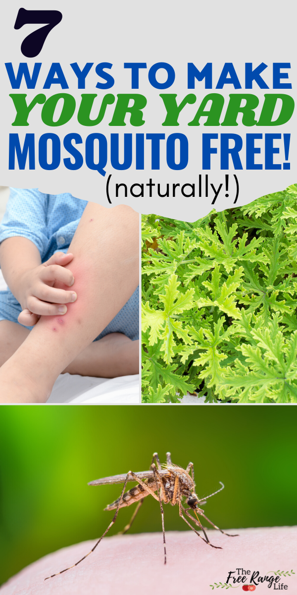 How To Get Rid Of Mosquitoes At Home Permanently